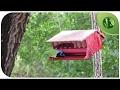 Sons da Natureza: Música para Relaxar e Meditar com Pássaros Cantando ૐ Bem Estar e Dormir Bem