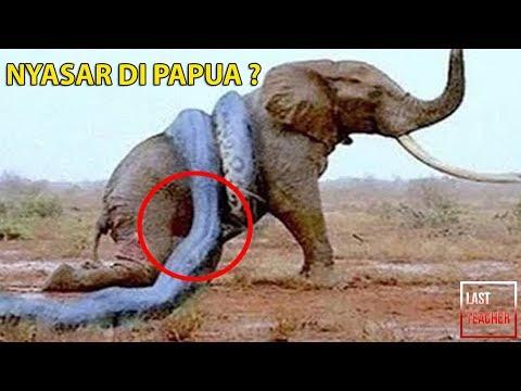 1 Nyasar Di Papua? 10 Monster Hutan Amazon Paling Mengerikan dan Ditakuti
