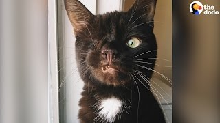 Pirate Cat: One-Eyed Cat Looks Like A Pirate | The Dodo