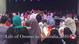 #OromoProtests Oromo in Australia Jan.  2016