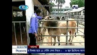 Exclusive Brahma Bull Bangladesh 2017
