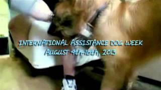 International Assistance Dog Week TV PSA 2013