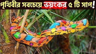 বিশ্বের সবচেয়ে ভয়ংকর পাঁচটি সাপ দেখুন ।  Top 5 Snake In The World I IN BANGLA