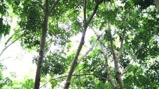 Ladyboys - Jungle Unchained