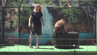 WILD WORLD OF ANIMALS   2014