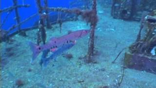 Black light fish ,Underwater footage  - ,free video download