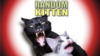 Talking Kitty Cat 43 - Random Kitten