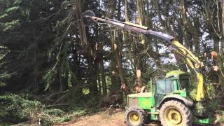 Cutting overgrown trees
