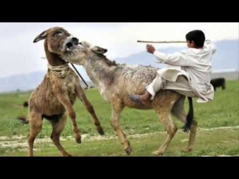 Funny videos 2016-Videos de risa || Whatsapp Videos Fails Engraçados Comedy Risas May 201