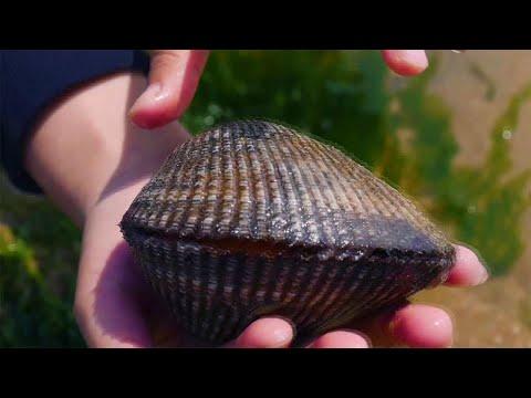 小章到海边赶海,海鲜遍地随便捡,捡到超大的血蛤,回家做大餐犒劳自己【赶海小章】