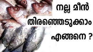 How To Choose Good Fish From Market