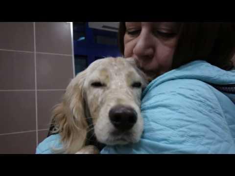 Xxx Mp4 Собака Тоби едет в Нижневартовск после лечения 3gp Sex