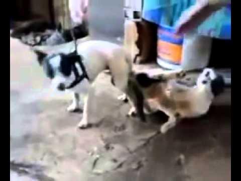 Chuyện Lạ S� ra con gì đây Chó hiếp Mèo