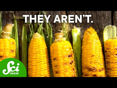 Why are GMOs Bad