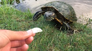 I Feed The Turtles!