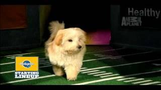 Puppy Bowl VI- Starting Lineup