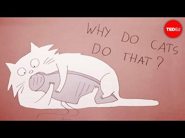 Why do cats act so weird? - Tony Buffington