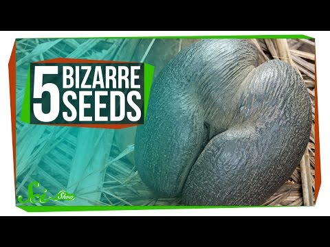 5 of the World s Most Bizarre Seeds
