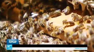 لإنتاج الغذاء الملكي يقطع النحل عشرات الكيلومترات يومياً !