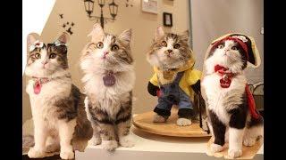 كبرو قططي واختلفت شخصياتهم 😹❤️