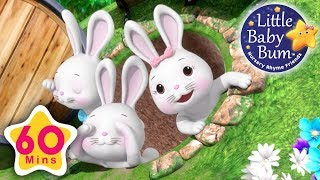 Bunny Hop Hop | Plus Lots More Nursery Rhymes | 60 Minutes Compilation from LittleBabyBum!