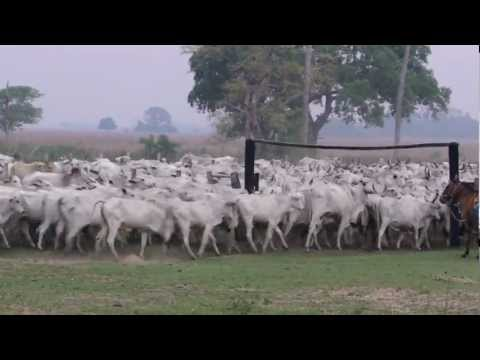 Comitiva Fazenda Santa Therezinha Pantanal MS