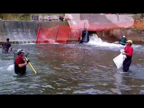Xxx Mp4 How To Catch A Salmon XXXX 18 3gp Sex