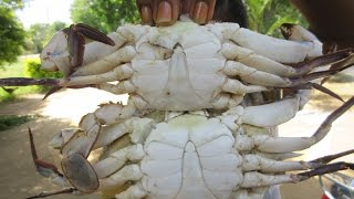 Cooking Sea Crab in My Village | Prepare My Wife | VILLAGE FOOD