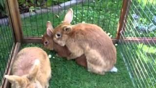 Hot bunny gang bang