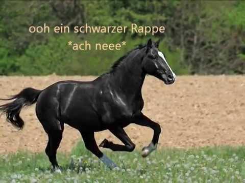 Lustige Sprüche rund ums Thema Pferd und Reiter