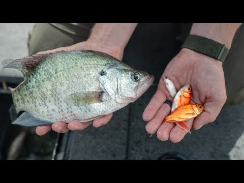 CRAPPIE Fishing with LIVE BAIT Under Bridge