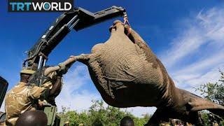 Should countries be forced to take action to protect their wildlife?