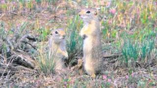 Hope for Endangered Species Act Candidates   Endangered Animals   WildEarth Guardians