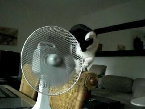 Katze trifft Ventilator