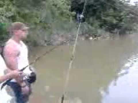 ikan belida 5 KG