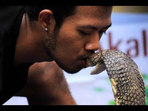 Xxx Mp4 Desi Man Kisses King Cobra 3gp Sex