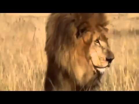 El León mata Hienas mejor documental del mundo