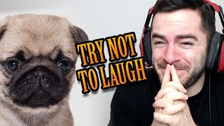 TRY NOT TO LAUGH - Pug Edition