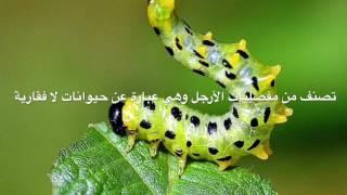 معلومات عن الحشرات - informaiton for insects /  مشروع مادة الأحياء