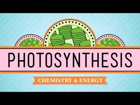 Xxx Mp4 Photosynthesis Crash Course Biology 8 3gp Sex