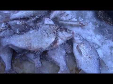 диалоги касательно рыбалке во  дубне