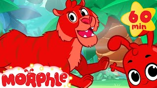 Tiger Adventures with Morphle ( +1 hour My Magic Pet Morphle Kids Animal Videos Compilation)