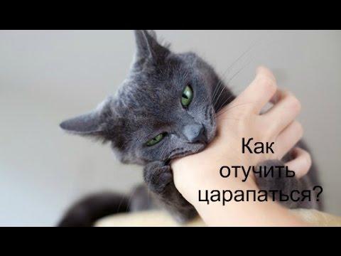 Кот постоянно царапается что делать