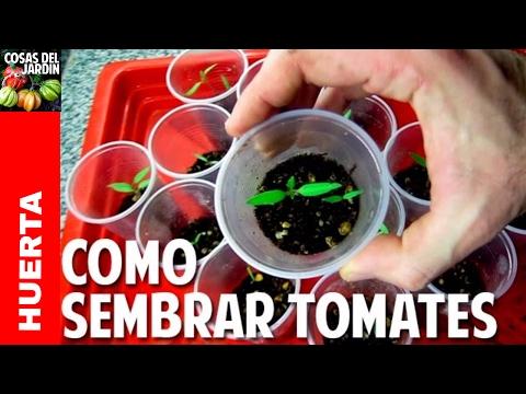 Como Sembrar Tomate desde Semilla Germinación en 7 días Video Completo cosasdeljardin