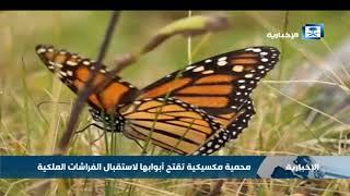 محمية مكسيكية تقتح أبوابها لاستقبال الفراشات الملكية