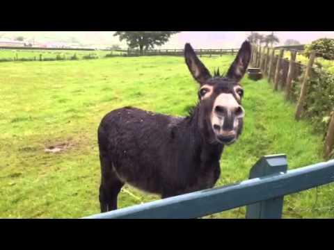 Xxx Mp4 Eddie The Donkey Braying 3gp Sex