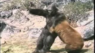 Re: Bear Vs. Gorilla