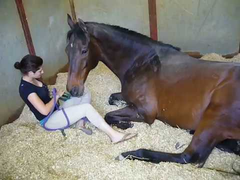 Girl and Horse Great Bond
