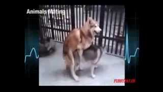 animal matching pet dogs hourse and dongy