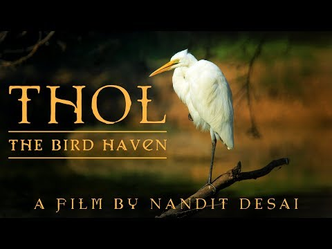 Xxx Mp4 THOL The Bird Haven Documentary By Nandit Desai 3gp Sex